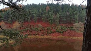 Derwent and Howden Reservoir