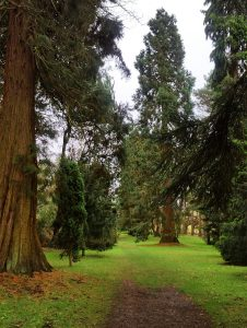 The PInetum at Chatsworth House
