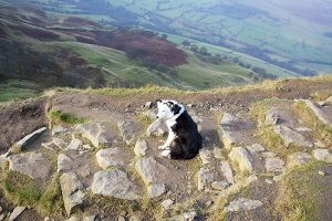 A dog on Back Tor on the Great Ridge