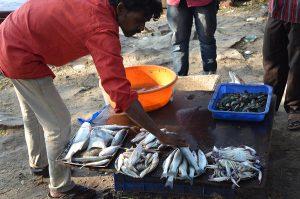 Cochin Fish Market