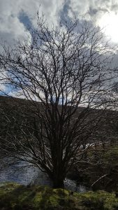 A Tree at Howden Reservoir