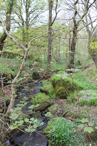 Brook in Froggatt Wood