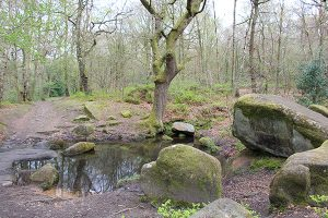 A Pool in Froggatt Wood