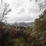 Curbar Edge and Curbar Wood
