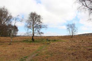 Froggatt Edge Stone Circle on Stoke Flats