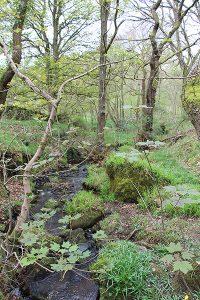Brook in Froggatt Wood