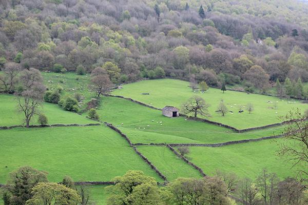 Grindleford and Froggatt Wood