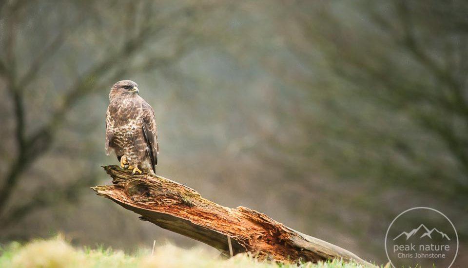 Peak Nature Photography Hides